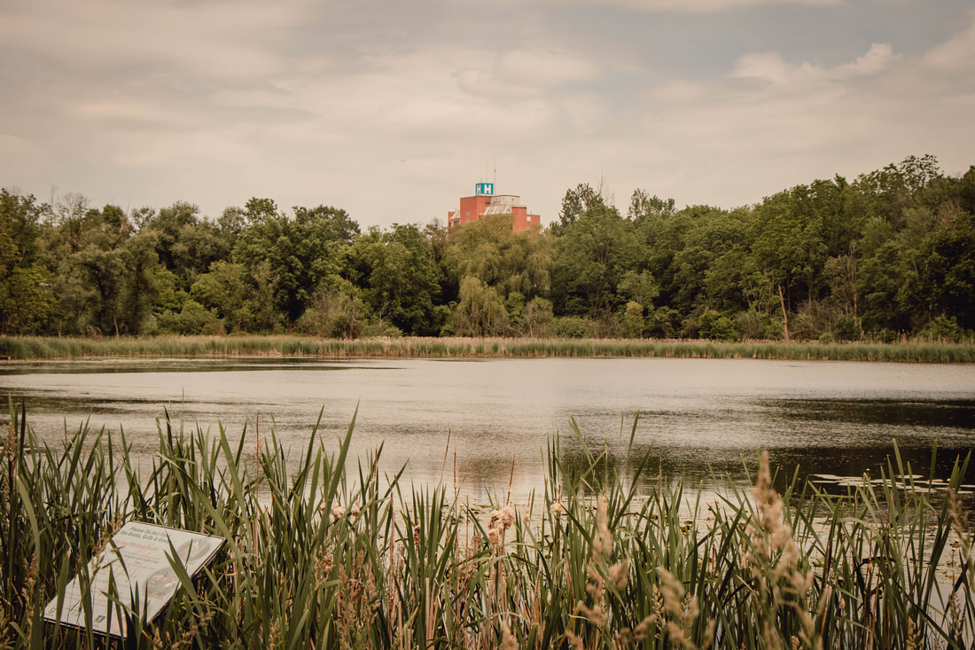 Sheomaker Pond, Lakeside Park, Kitchener,Ontario  with St. Mary's Hospital in the background